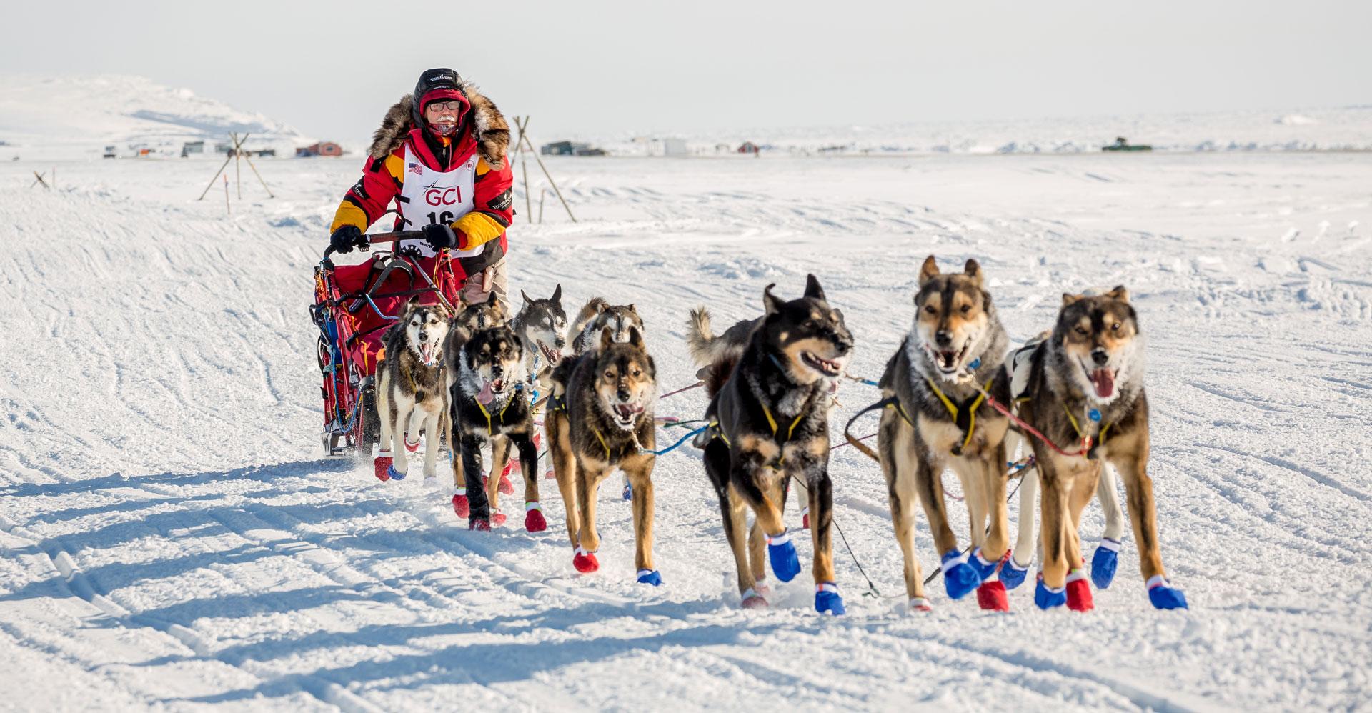 Seavey's IdidaRide Dog Sled Tour - Mitch Seavey Iditarod Champion 2017