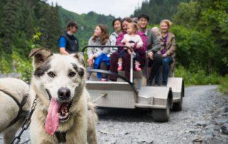 Dog Sled Tour Alaska - guests on the dog sled tour
