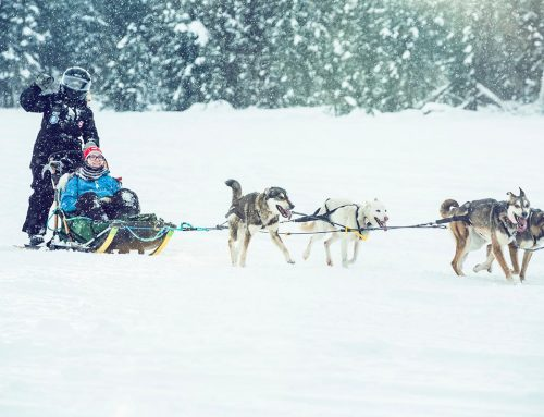 Winter Dog sledding in Alaska