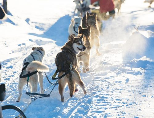 Best Alaska Dog Sledding Tours