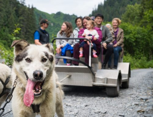 SUMMER DOG SLEDDING TOURS IN SEWARD, ALASKA