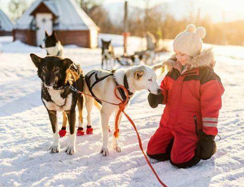 Dogsledding With Kids? Yes, you can (and should)