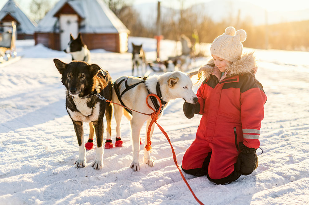 Top 5 Destinations for Dog Sledding Tours Around the World