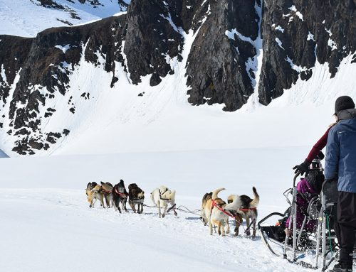 The Brown Mile – Iditarod's Long Dirty Secret