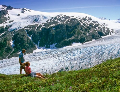 Explore Seward's Exit Glacier