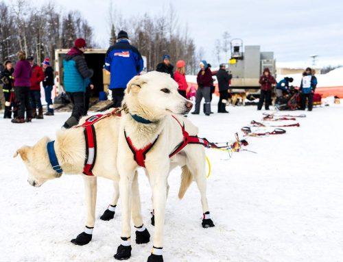 #Iditarod Strategy – Nikolai