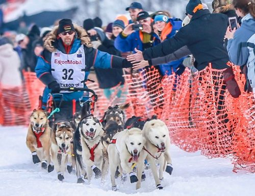 Iditarod Trail Sled Dog Race Champion Turns to Mushing – Themed Tours