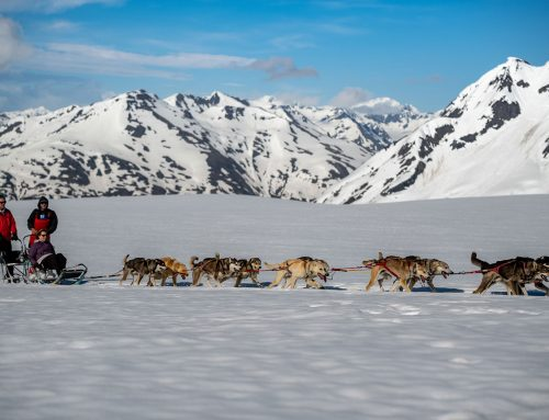 Anchorage Dog Sledding Tours: Mush away a summer day
