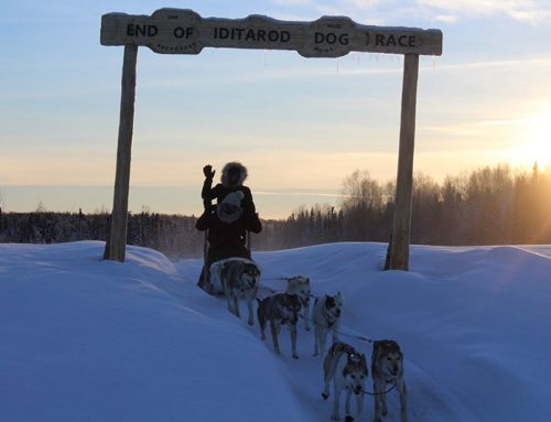 Learn About the Iditarod Race
