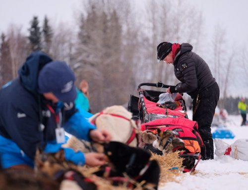20 teams are still in position to win Iditarod!